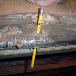 A floor joist with severe mold damage in Piedmont